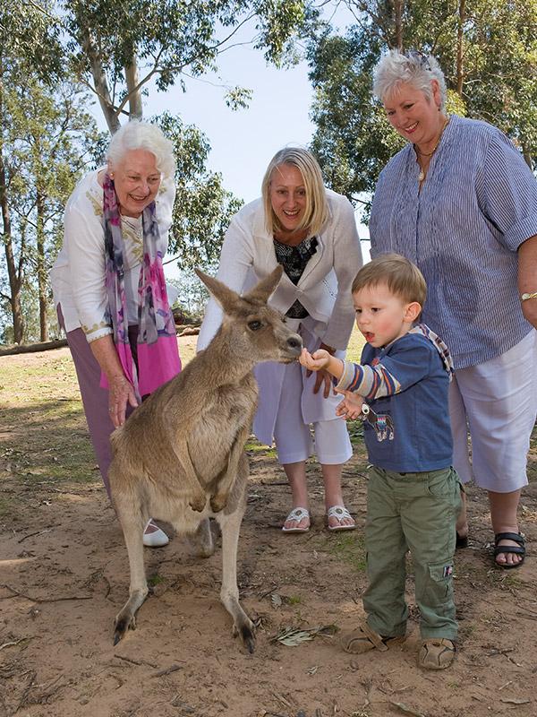 Hand-feed wallabies at Lone Pine Koala Sanctuary